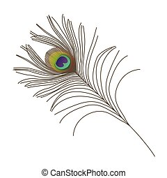 peacock feather - realistic peacock feather isolated on...