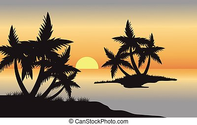Palm in beach at sunset