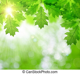 Spring leaves of oak tree on green natural background
