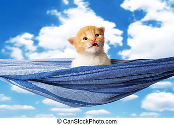 Cute red orange kitten in hammock at blue sky - Red kitten...