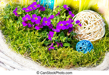 Aubretia with mos for Garden decoration - Aubretia with mos...