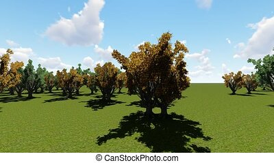 amur cork tree in springtime, animation
