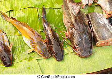 Freshly caught catfish on palm leaf in a fish market, Luang Prabang, Laos