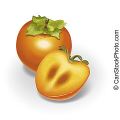 Persimmon - detailed illustration for your projects