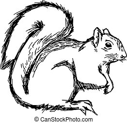 illustration vector hand draw doodles of squirrel isolated on white background.