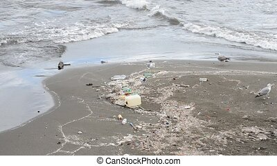 Gull between rubbish on beach at naples - Gull searching for...