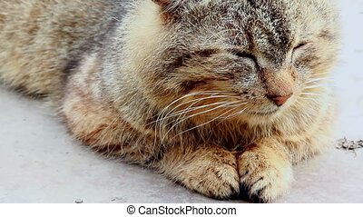 tabby cat doze