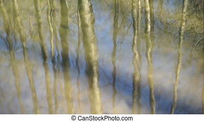 Reflection of trees mirrored on rippled water surface -...