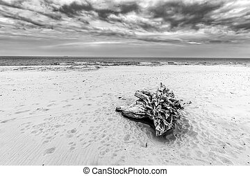 Tree trunk on the beach Cloudy, stormy day Black and white...
