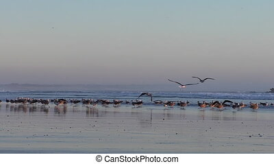 Seagulls taking off at sunset