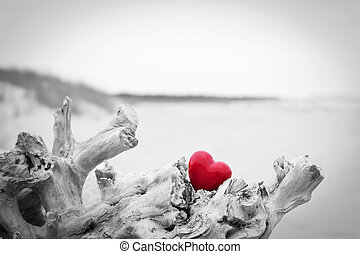 Red heart in a tree trunk on the beach Love symbol Red...