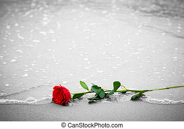 Waves washing away a red rose from the beach Color against...