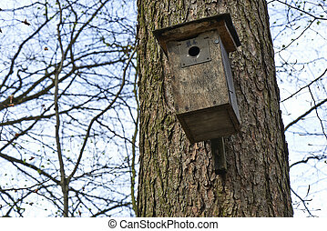 Bird house in tree from the forest of Halle in Belgium