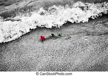 Waves washing away a red rose from the beach. Color against...
