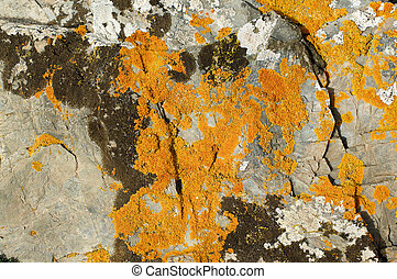 Granite with Fungal Mold - Background of Textured Grey...