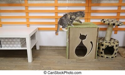 Gray cat jumps on scratching post