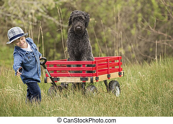 small boy with dog in wagon - small boy pulling his large...