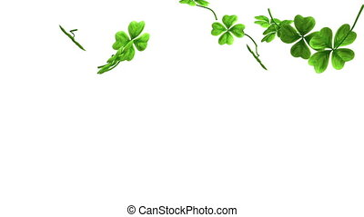Falling Shamrock Leaves footage - Video footage of falling...