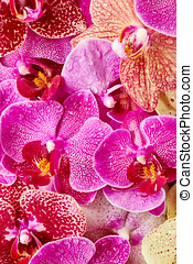 Orchid flowers with drops of water - Beautiful orchid...