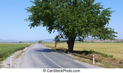 """empty road by huge tree in natural contryside, """