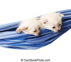 Cute white kittens in a hammock isolated - Two white kittens...