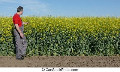Farmer examine canola field - Agronomist or farmer examine...