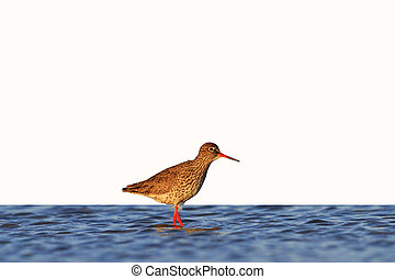 waterbirds isolated on white,waterbirds in salt lake at...