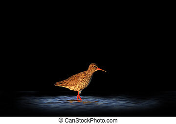 waterbirds isolated on black blurred background,waterbirds...