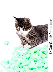 packing material - little grey tiger cat playing with...