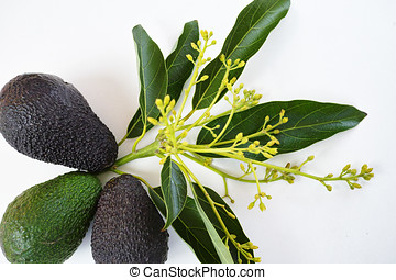Fresh green avocados with leaves