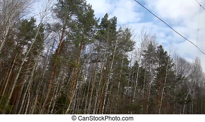 View from train on forest and sky