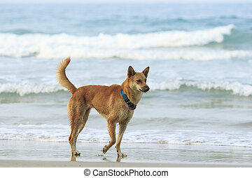 face of street dog standing on sand beach