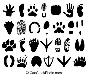 Traces of the person and animals A vector illustration