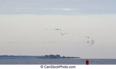 Flock of flying birds arrange in V-formation for migration -...