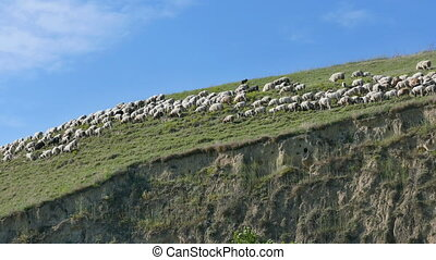 Sheep at berg, Titel Serbia - Herd of sheep at hill, Titel...