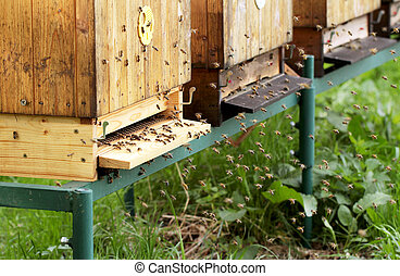 Bee house - Bees on honeycomb in hive