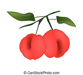 Two Fresh Angel Peach Hanging on A Branch - Illustration of...