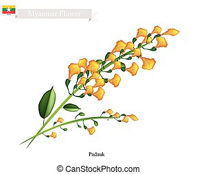National Flower of Myanmar, Yellow Padauk Flowers - Myanmar...