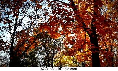 autumn walk in forest