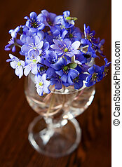 Bouquet Of Hepatics - close-up bouquet of small blue...