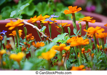 Group of orange flowers with a green stem in the garden