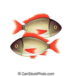 Two fish isolated on white vector