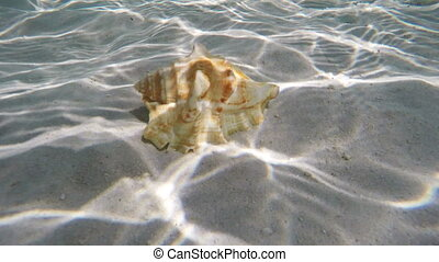 Seashell under water - Seashell lies under the water on the...