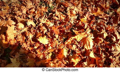 Moving through in autumn leaves