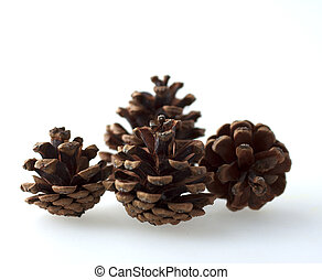 Pine cones - Bunch of pine cones over white background