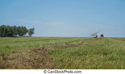Farmer harvesting silage Combine in field - farmer combain...