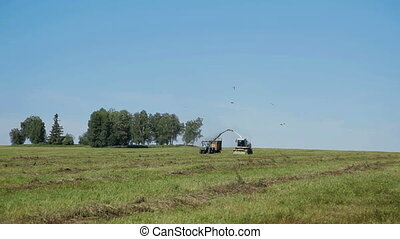 Farmer harvesting silage Combine in field