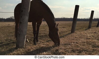 Horse in the shelter eats a grass. Video full hd.