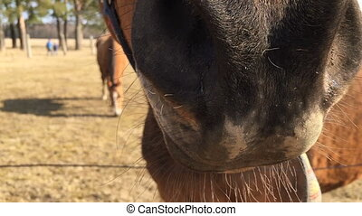 Muzzle of a horse close up.