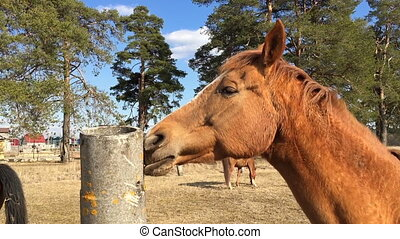 Horse licks a concrete pole on the background of other...